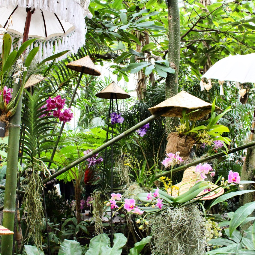 10001 orchidées - jardin des plantes
