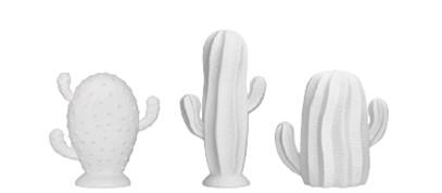 nouvelles_co_PE16_cactus